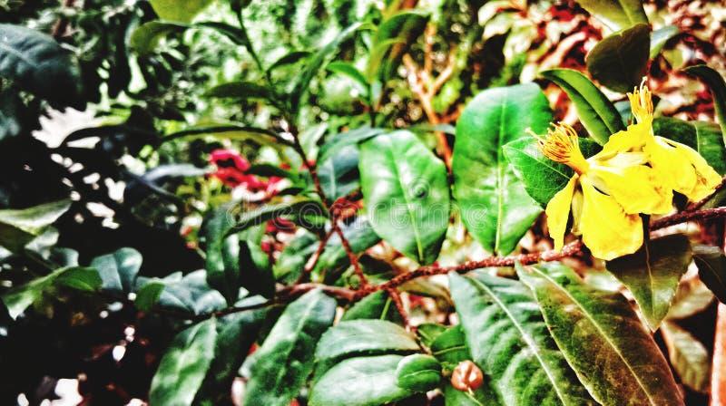 Κίτρινο λουλούδι και πράσινο φύλλο στοκ φωτογραφίες
