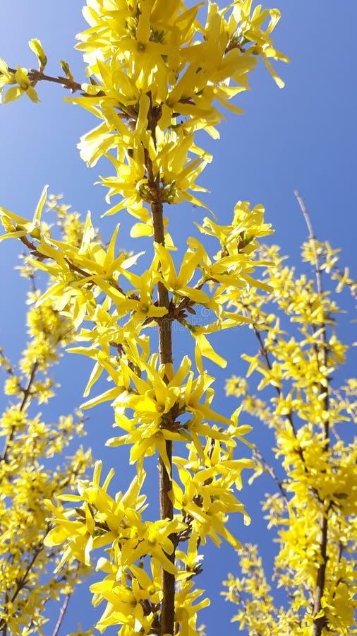 Κίτρινο λουλούδι στο μπλε ουρανό στοκ φωτογραφία