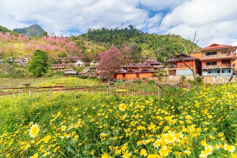 Κίτρινο λουλούδι και ρόδινο άνθος κερασιών με ένα πορτοκαλί σπίτι στοκ εικόνες