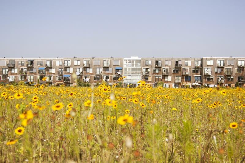 Κίτρινο λουλούδι και σύγχρονη ολλανδική κατοικία στοκ φωτογραφίες