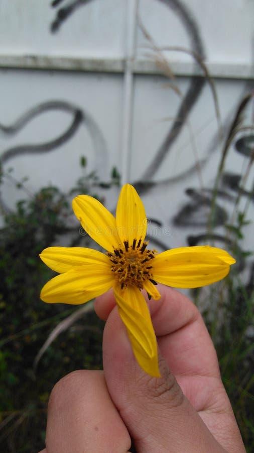 Κίτρινο λουλούδι N° 1 στοκ εικόνα με δικαίωμα ελεύθερης χρήσης
