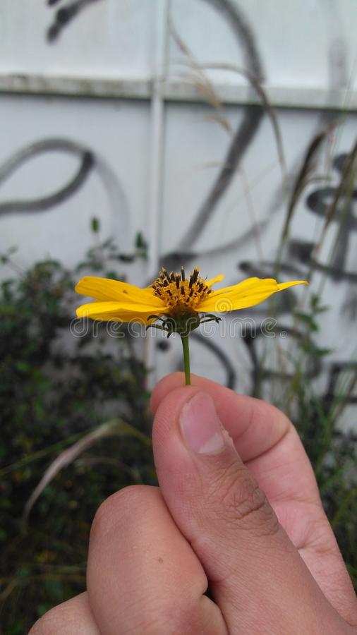 Κίτρινο λουλούδι N° 2 στοκ φωτογραφίες