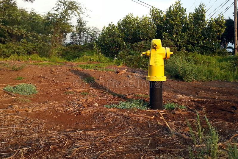 Κίτρινο στόμιο υδροληψίας πυρκαγιάς στοκ φωτογραφίες