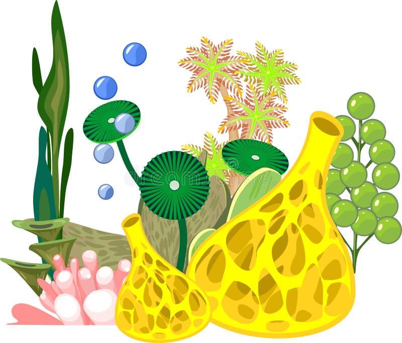 Κίτρινο σφουγγάρι, φύκι και άλλη θαλάσσια ζωή απεικόνιση αποθεμάτων