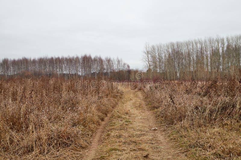 Κίτρινο τοπίο στη νεφελώδη ημέρα φθινοπώρου με το σύνολο τομέων της ξηρών χλόης και του δρόμου στοκ εικόνες