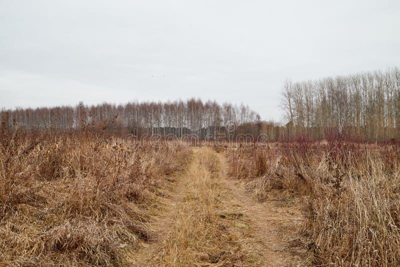 Κίτρινο τοπίο στη νεφελώδη ημέρα φθινοπώρου με το σύνολο τομέων της ξηρών χλόης και του δρόμου στοκ φωτογραφία με δικαίωμα ελεύθερης χρήσης