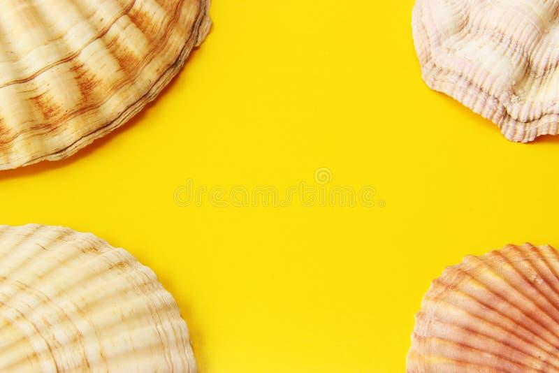 Κίτρινο υπόβαθρο με τα κοχύλια θάλασσας στοκ εικόνες