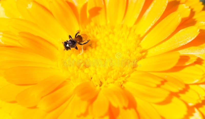 Κίτρινο υπόβαθρο λουλουδιών στοκ φωτογραφία