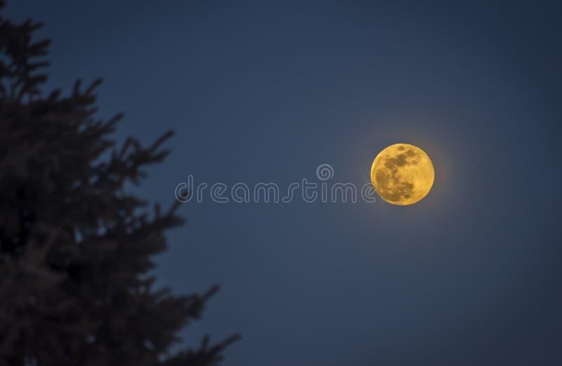 Κίτρινο φεγγάρι στο Ουισκόνσιν στοκ εικόνες