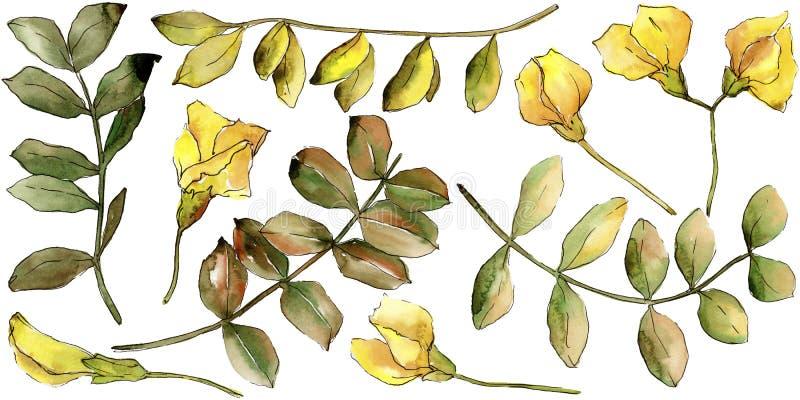 Κίτρινο φύλλο ακακιών Watercolor Floral φύλλωμα βοτανικών κήπων φυτών φύλλων Απομονωμένο στοιχείο απεικόνισης απεικόνιση αποθεμάτων