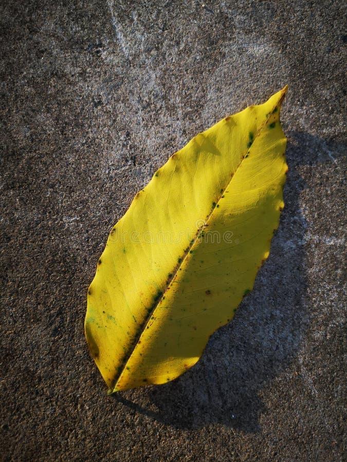 Κίτρινο φύλλο στο πάτωμα στοκ εικόνες με δικαίωμα ελεύθερης χρήσης