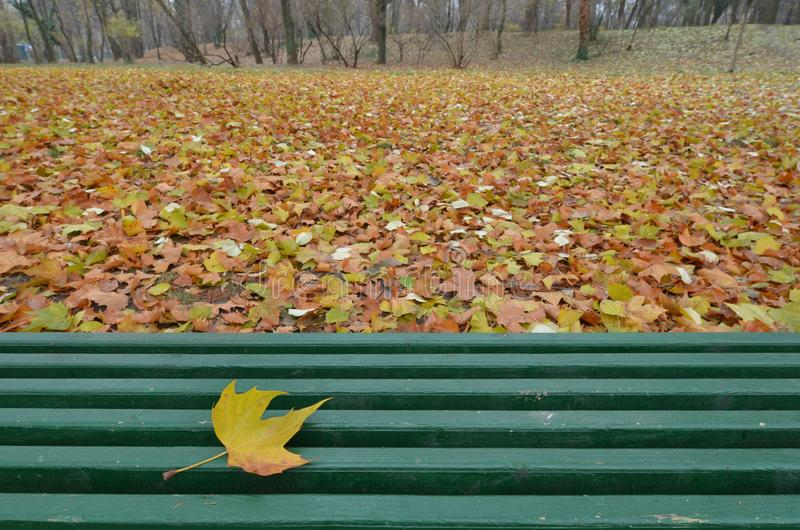 Κίτρινο φύλλο σφενδάμου που βρίσκεται στον πράσινο ξύλινο πάγκο, κανένας στοκ φωτογραφία με δικαίωμα ελεύθερης χρήσης