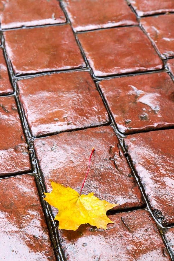Κίτρινο φύλλο φθινοπώρου στοκ εικόνα