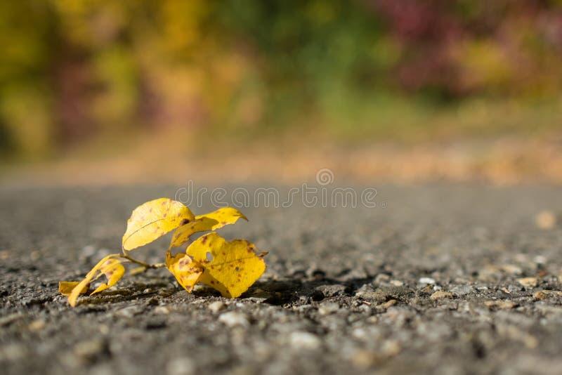 Κίτρινο φύλλο σε έναν δρόμο στοκ φωτογραφία με δικαίωμα ελεύθερης χρήσης