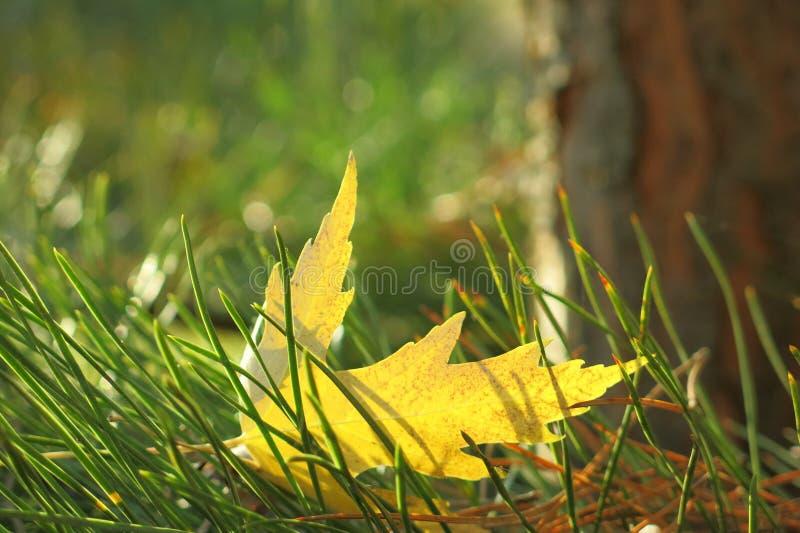 Κίτρινο φύλλο στοκ φωτογραφία με δικαίωμα ελεύθερης χρήσης