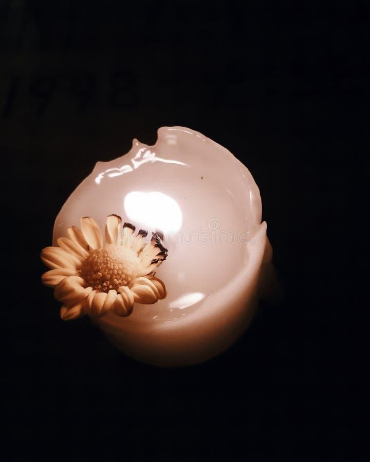 Καίγοντας λουλούδια στις τέφρες στοκ φωτογραφία με δικαίωμα ελεύθερης χρήσης