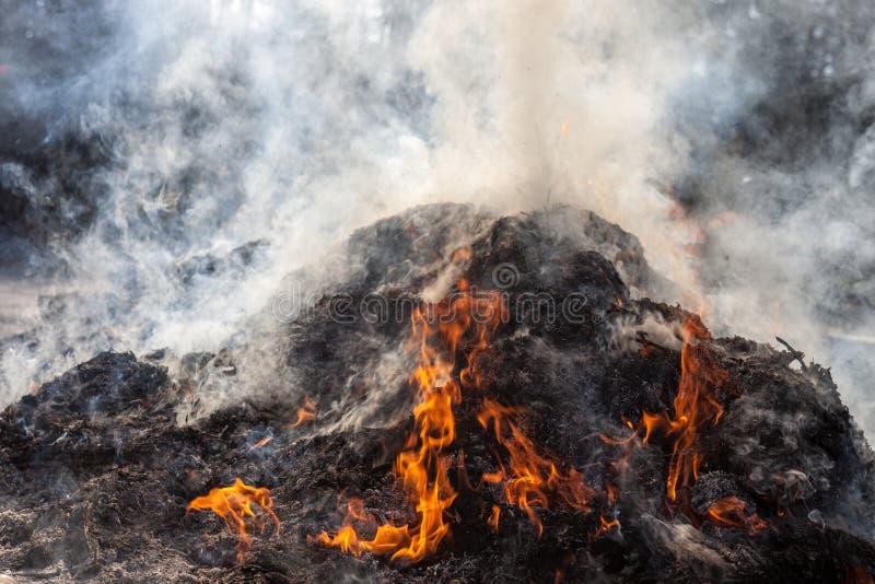 Καίγοντας φύλλα και χλόη του περασμένου χρόνου στην πυρκαγιά στοκ φωτογραφίες με δικαίωμα ελεύθερης χρήσης