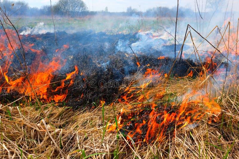 Καίγοντας χλόη στον τομέα Υπάρχει ένας κίνδυνος και ένας κίνδυνος πυρκαγιάς για το κοντινά δάσος και τα κτήρια Φλόγα που διαδίδετ στοκ εικόνες