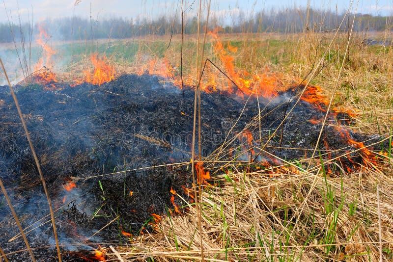 Καίγοντας χλόη στον τομέα Υπάρχει ένας κίνδυνος και ένας κίνδυνος πυρκαγιάς για το κοντινά δάσος και τα κτήρια Φλόγα που διαδίδετ στοκ φωτογραφία με δικαίωμα ελεύθερης χρήσης