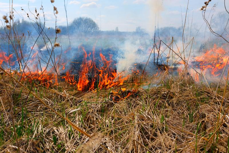 Καίγοντας χλόη στον τομέα Υπάρχει ένας κίνδυνος και ένας κίνδυνος πυρκαγιάς για το κοντινά δάσος και τα κτήρια Φλόγα που διαδίδετ στοκ φωτογραφίες με δικαίωμα ελεύθερης χρήσης