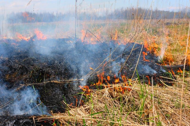 Καίγοντας χλόη στον τομέα Υπάρχει ένας κίνδυνος και ένας κίνδυνος πυρκαγιάς για το κοντινά δάσος και τα κτήρια Φλόγα που διαδίδετ στοκ εικόνες με δικαίωμα ελεύθερης χρήσης