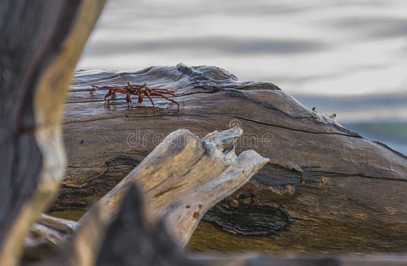 Καβούρια στους βράχους στοκ φωτογραφία με δικαίωμα ελεύθερης χρήσης