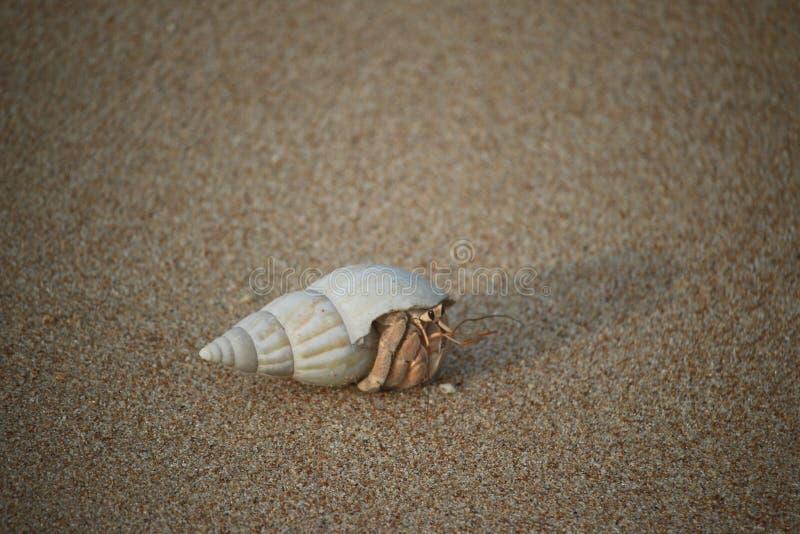 Καβούρι, άμμος, στοκ εικόνα με δικαίωμα ελεύθερης χρήσης