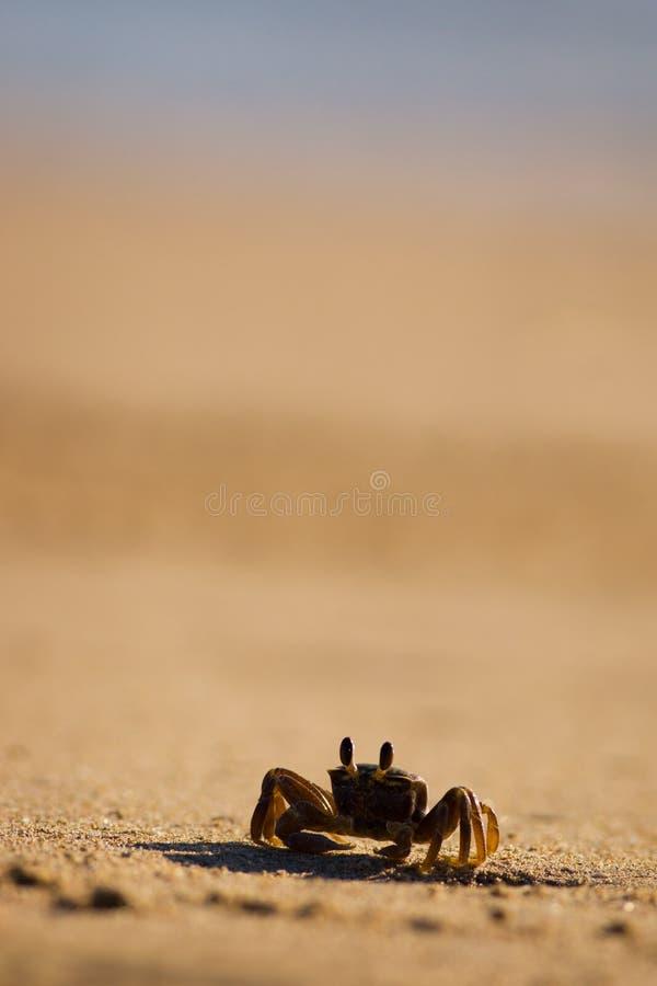 καβούρι παραλιών στοκ φωτογραφία με δικαίωμα ελεύθερης χρήσης