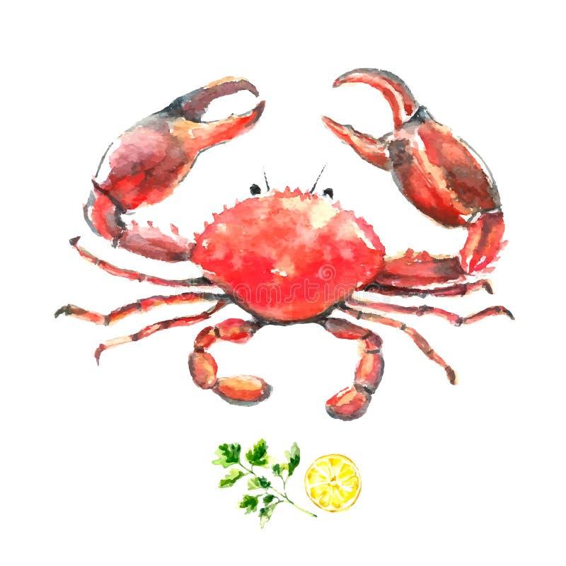 Καβούρι Watercolor διανυσματική απεικόνιση