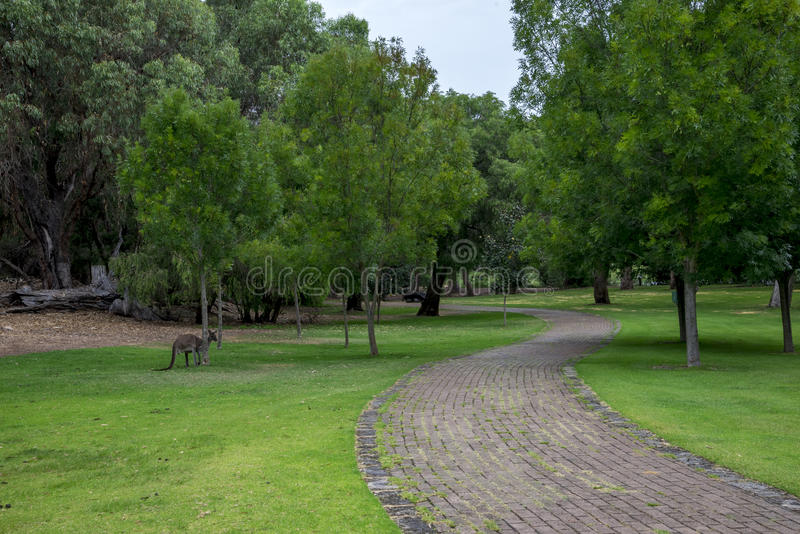 Καγκουρό σε ένα πάρκο πικ-νίκ και πορεία περπατήματος κοντά στη λίμνη McNess λιμνών στοκ φωτογραφία με δικαίωμα ελεύθερης χρήσης