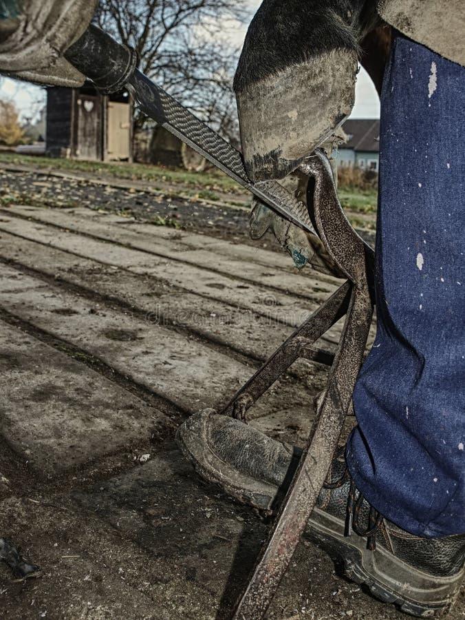 Καθάρισμα αγροτικής ουσίας αλόγων και τέμνουσα οπλή στοκ φωτογραφία με δικαίωμα ελεύθερης χρήσης