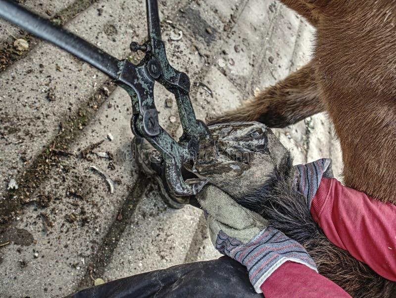 Καθάρισμα αγροτικής ουσίας αλόγων και τέμνουσα οπλή στοκ φωτογραφίες με δικαίωμα ελεύθερης χρήσης