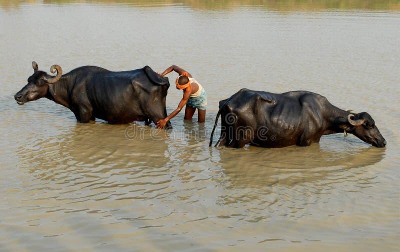 Καθαρή Ινδία στοκ εικόνες