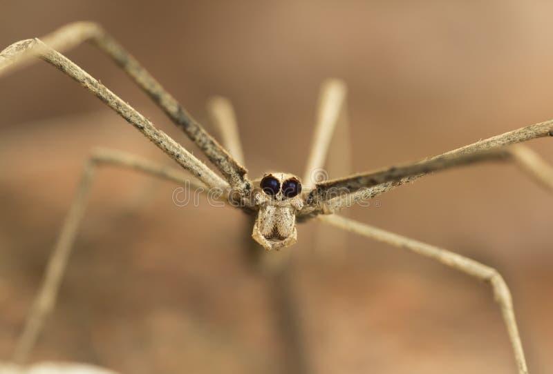 Καθαρή πετώντας αράχνη στοκ φωτογραφία με δικαίωμα ελεύθερης χρήσης