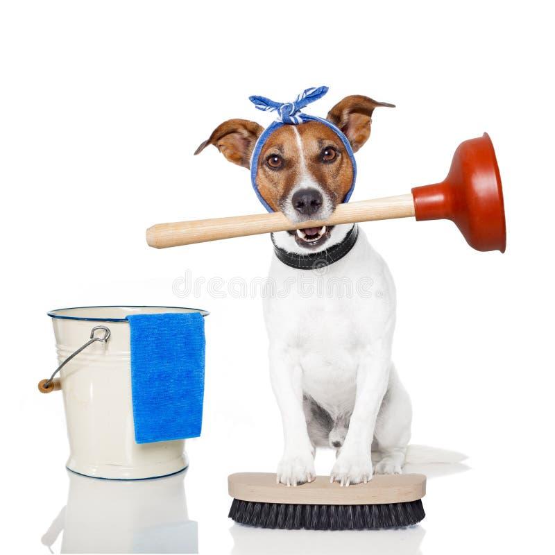καθαρίζοντας σκυλί στοκ φωτογραφίες