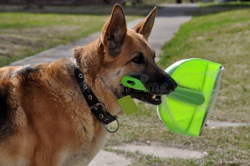 Καθαρίζοντας σκυλί στοκ φωτογραφία με δικαίωμα ελεύθερης χρήσης