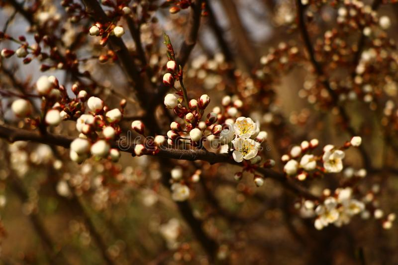 Καθαρίζω τον κήπο φθινοπώρου Κίτρινα φύλλα, θλίψη Όχι όλα τα δέντρα θα επιζήσουν, αυτός ο χειμώνας Το κυριώτερο πράγμα είναι κερά στοκ φωτογραφία