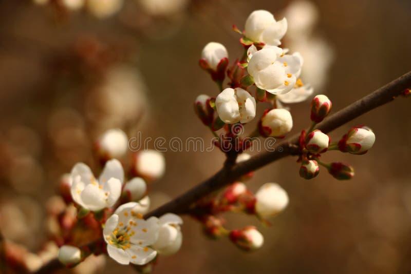 Καθαρίζω τον κήπο φθινοπώρου Κίτρινα φύλλα, θλίψη Όχι όλα τα δέντρα θα επιζήσουν, αυτός ο χειμώνας Το κυριώτερο πράγμα είναι κερά στοκ εικόνες