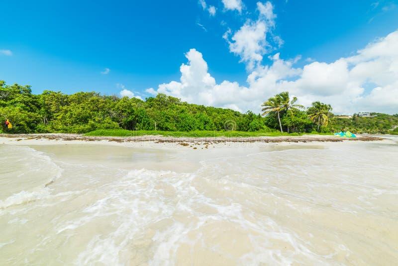 Καθαρίστε το νερό και τις πράσινες εγκαταστάσεις Pointe de Λα στη Saline παραλία στη Γουαδελούπη στοκ φωτογραφία με δικαίωμα ελεύθερης χρήσης