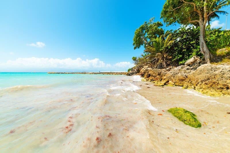 Καθαρίστε το νερό στην παραλία Λα Datcha στη Γουαδελούπη στοκ φωτογραφία