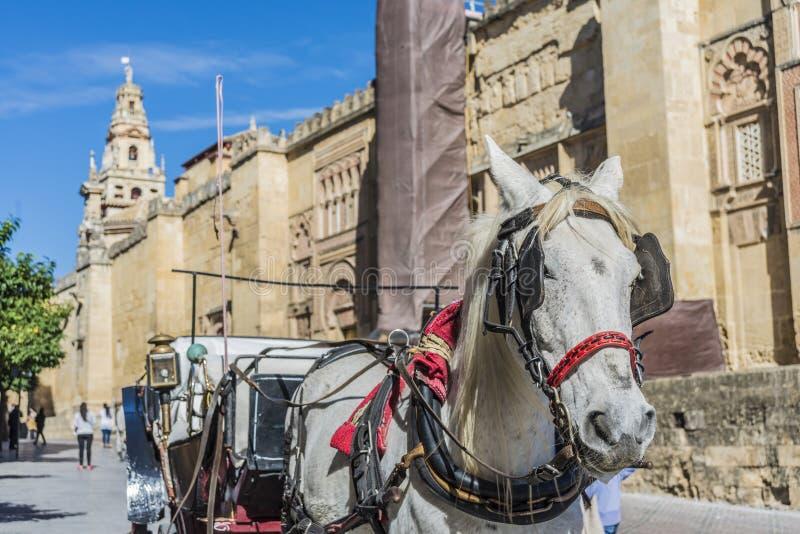 Καθεδρικός ναός μουσουλμανικών τεμενών της Κόρδοβα στην Ανδαλουσία, Ισπανία στοκ εικόνα με δικαίωμα ελεύθερης χρήσης