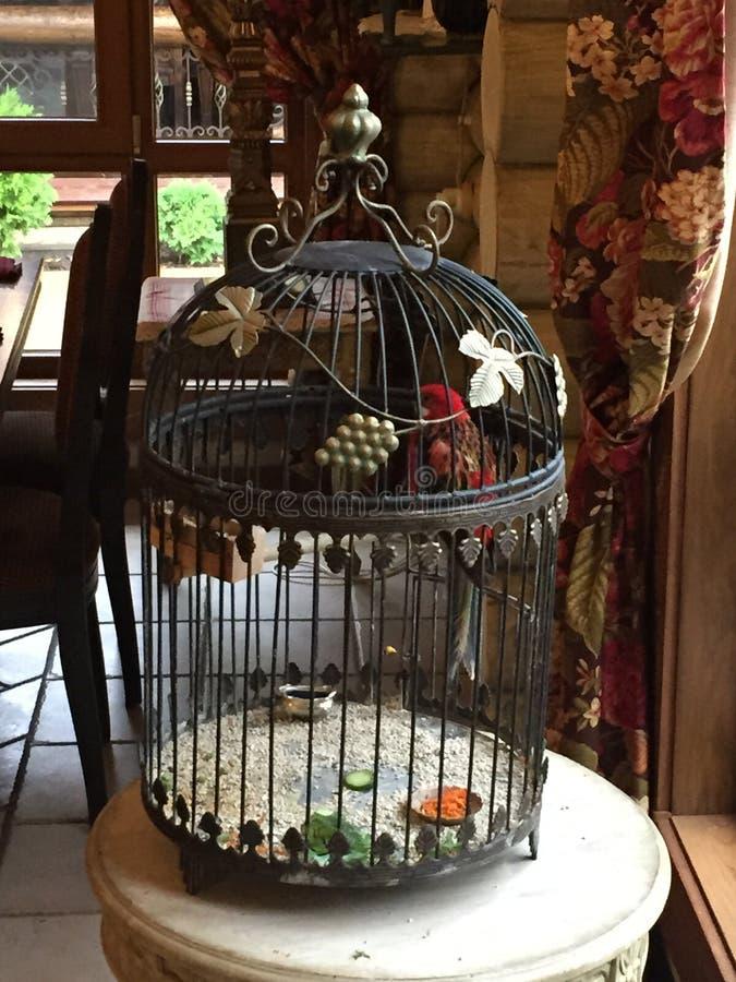 Καθημερινή ρουτίνα ενός παπαγάλου στο σπίτι! στοκ φωτογραφία