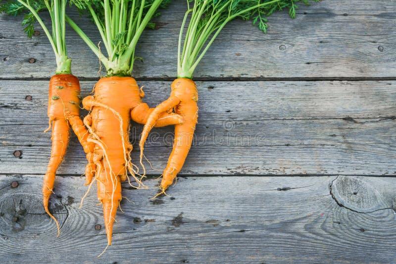 Καθιερώνον τη μόδα άσχημο οργανικό καρότο στοκ εικόνα με δικαίωμα ελεύθερης χρήσης