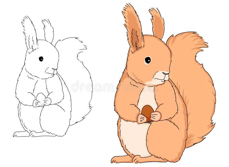 Καθμένος το χαριτωμένο σκίουρο με το καρύδι που επισύρεται την προσοχή με το χέρι στο άσπρο υπόβαθρο, διανυσματικό αγαθό απεικόνι ελεύθερη απεικόνιση δικαιώματος