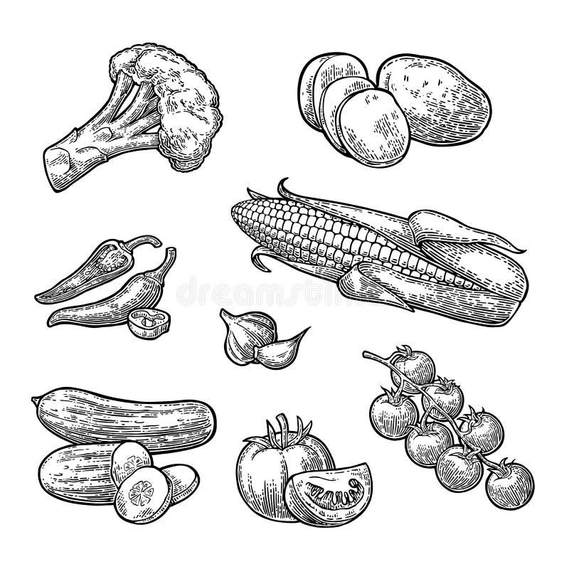 καθορισμένα λαχανικά Αγγούρια, σκόρδο, καλαμπόκι, πιπέρι, μπρόκολο, πατάτα και ντομάτα ελεύθερη απεικόνιση δικαιώματος