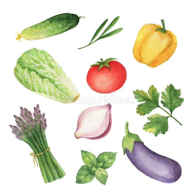 Καθορισμένα λαχανικά και χορτάρια Watercolor που απομονώνονται στο άσπρο υπόβαθρο απεικόνιση αποθεμάτων