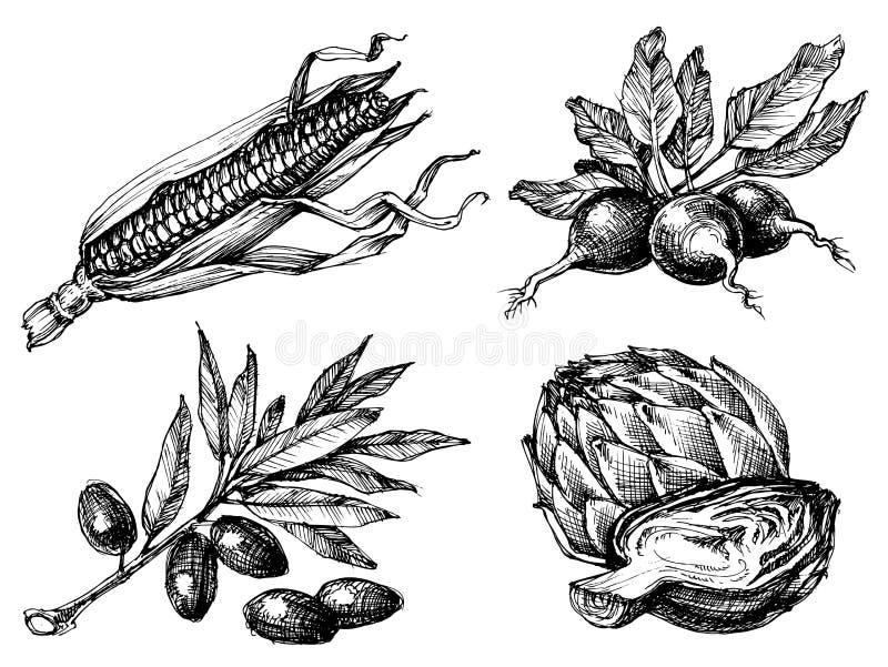 καθορισμένα λαχανικά απεικόνιση αποθεμάτων