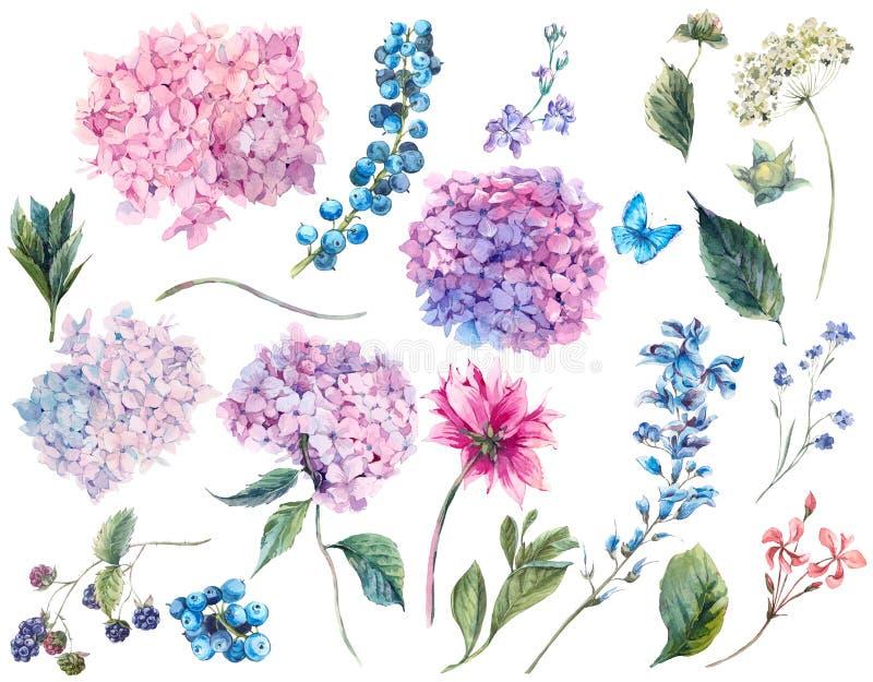 Καθορισμένα εκλεκτής ποιότητας στοιχεία watercolor Hydrangea στοκ εικόνες