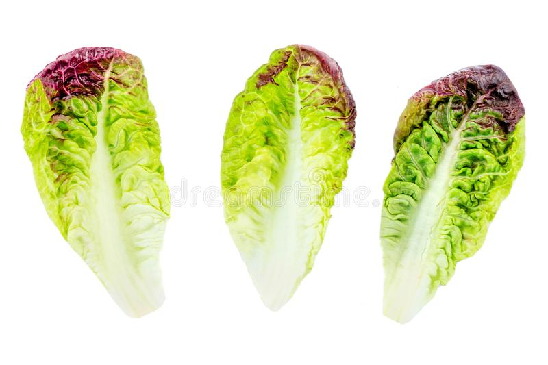 Καθορισμένα πράσινα φύλλα σαλάτας που απομονώνονται στο άσπρο υπόβαθρο Πορφυρή σαλάτα μαρουλιού στοκ εικόνα με δικαίωμα ελεύθερης χρήσης