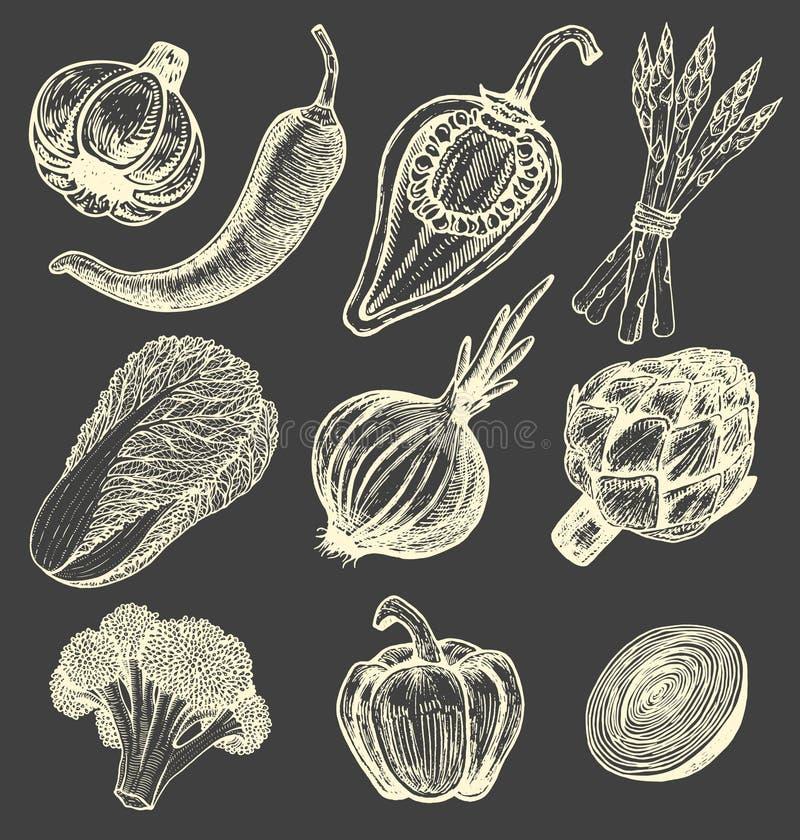 Καθορισμένα συρμένα χέρι στοιχεία με τα φρέσκα λαχανικά ύφους σκίτσων διαφορετικά πιπέρια Αγκινάρα και σπαράγγι Κουνουπίδι, κρεμμ απεικόνιση αποθεμάτων